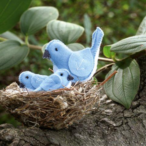 Styled shot of little softie bluebird family in nest